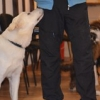 """Grupo Cachorros Marzo 2014_2 • <a style=""""font-size:0.8em;"""" href=""""http://www.flickr.com/photos/115110532@N02/13116598343/"""" target=""""_blank"""">View on Flickr</a>"""